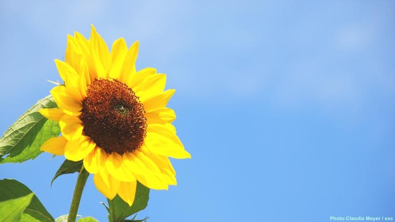 cww-photo-20140216-sunday-1600x900