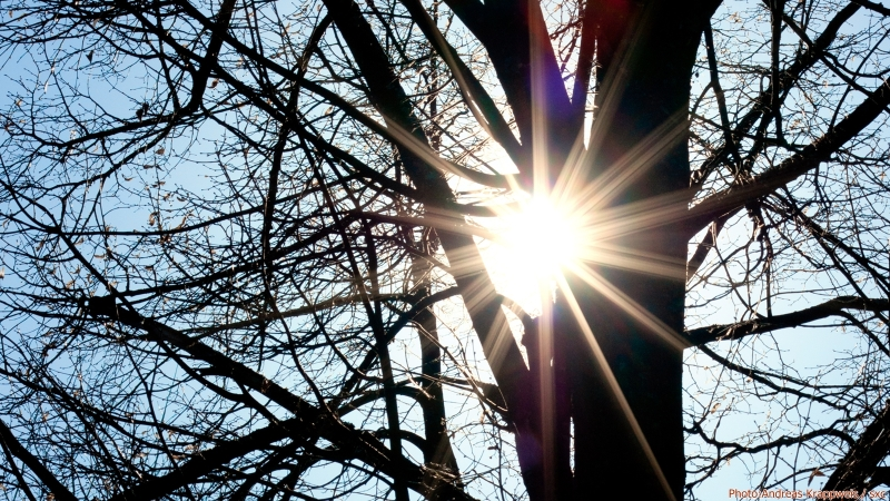 Sunburst in Tree